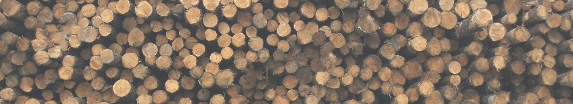 Ketten für die Holzindustrie Holzstämme